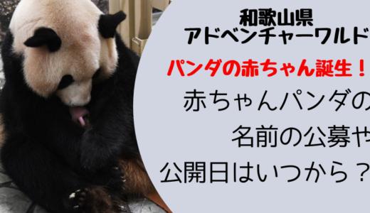 良浜が出産したパンダの赤ちゃんの名前の公募はいつから?公開日は?
